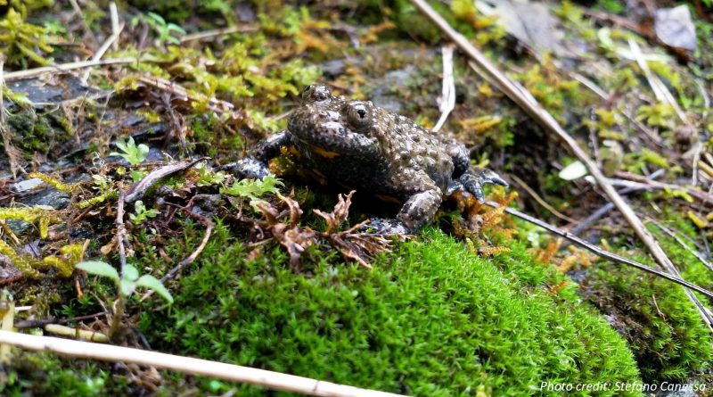 Els experts demanen que les noves polítiques de la Unió Europea s'orientin a millorar la conservació d'espècies amenaçades