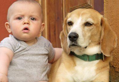 El CCS posa en marxa una campanya per conscienciar sobre la responsabilitat que implica adquirir un animal domèstic
