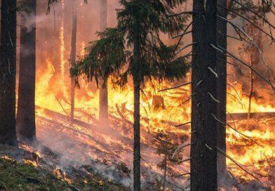 El coneixement desenvolupat els últims anys sobre patrons de propagació d'incendi és clau per facilitar l'extinció de grans incendis forestals